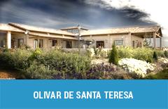34 olivar de santa teresa